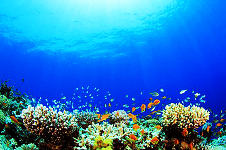 reef coral reef underwater fish background sea diving
