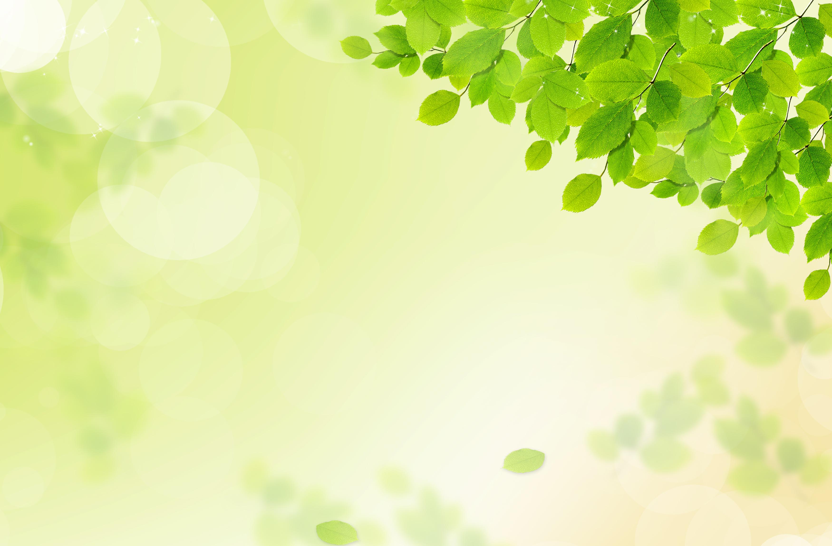 le tr u00e8fle conception la verdure leaf contexte plante