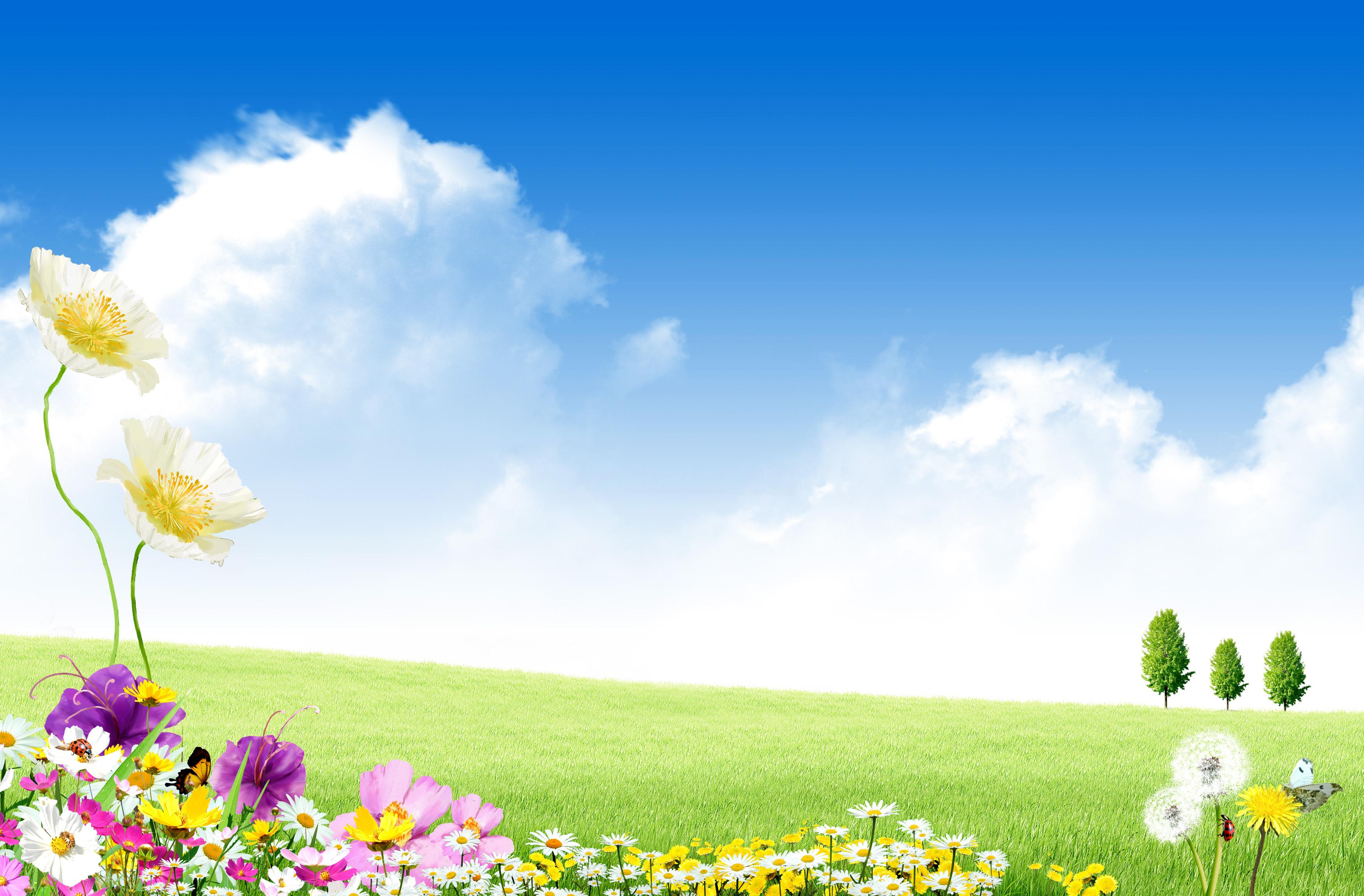 l image sur fond jaune violet blossomy steppe arri u00e8re plan