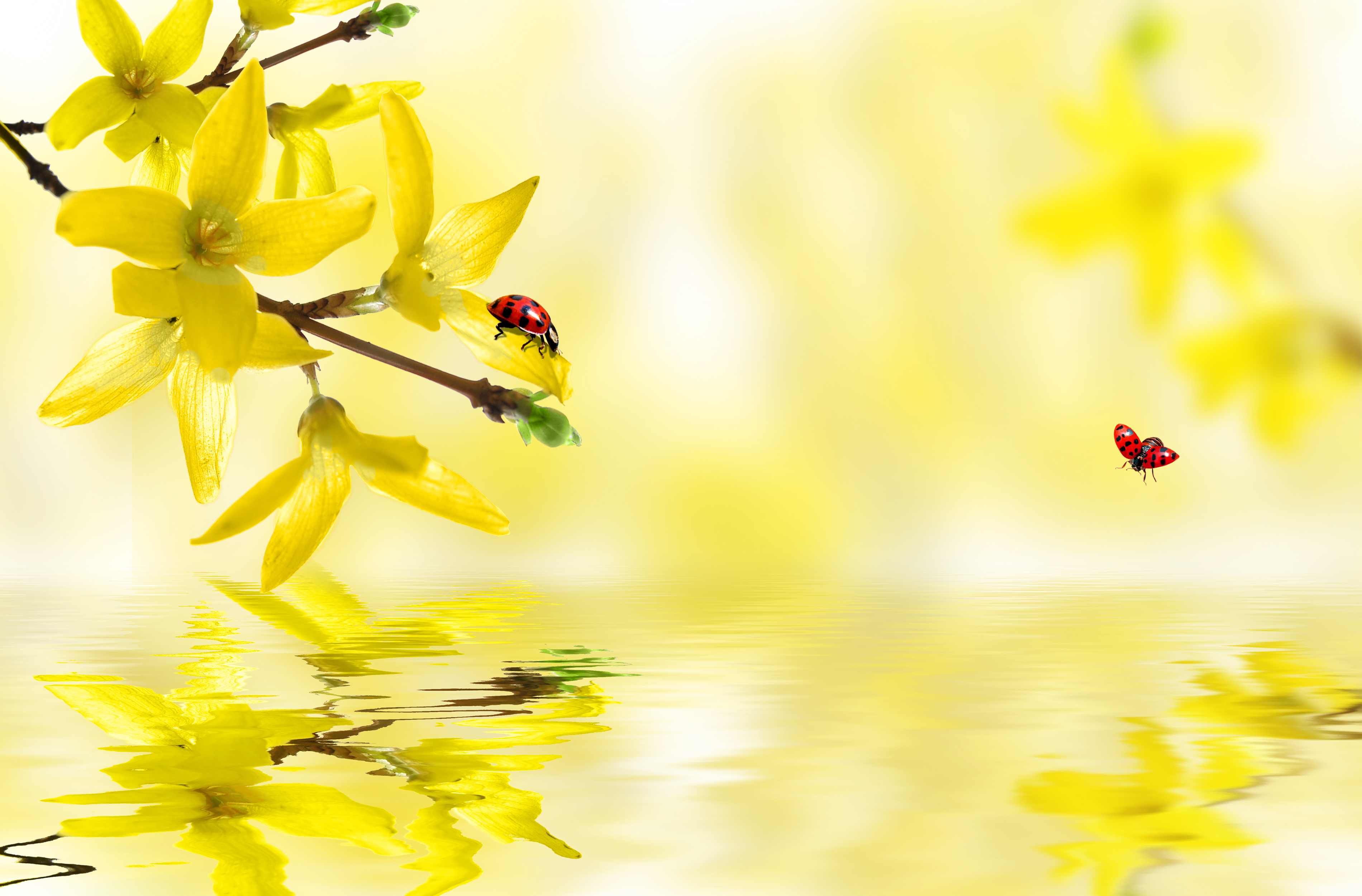 bureau de la nature bio biologique grand d u00e9cor le printemps paysage le printemps biologique