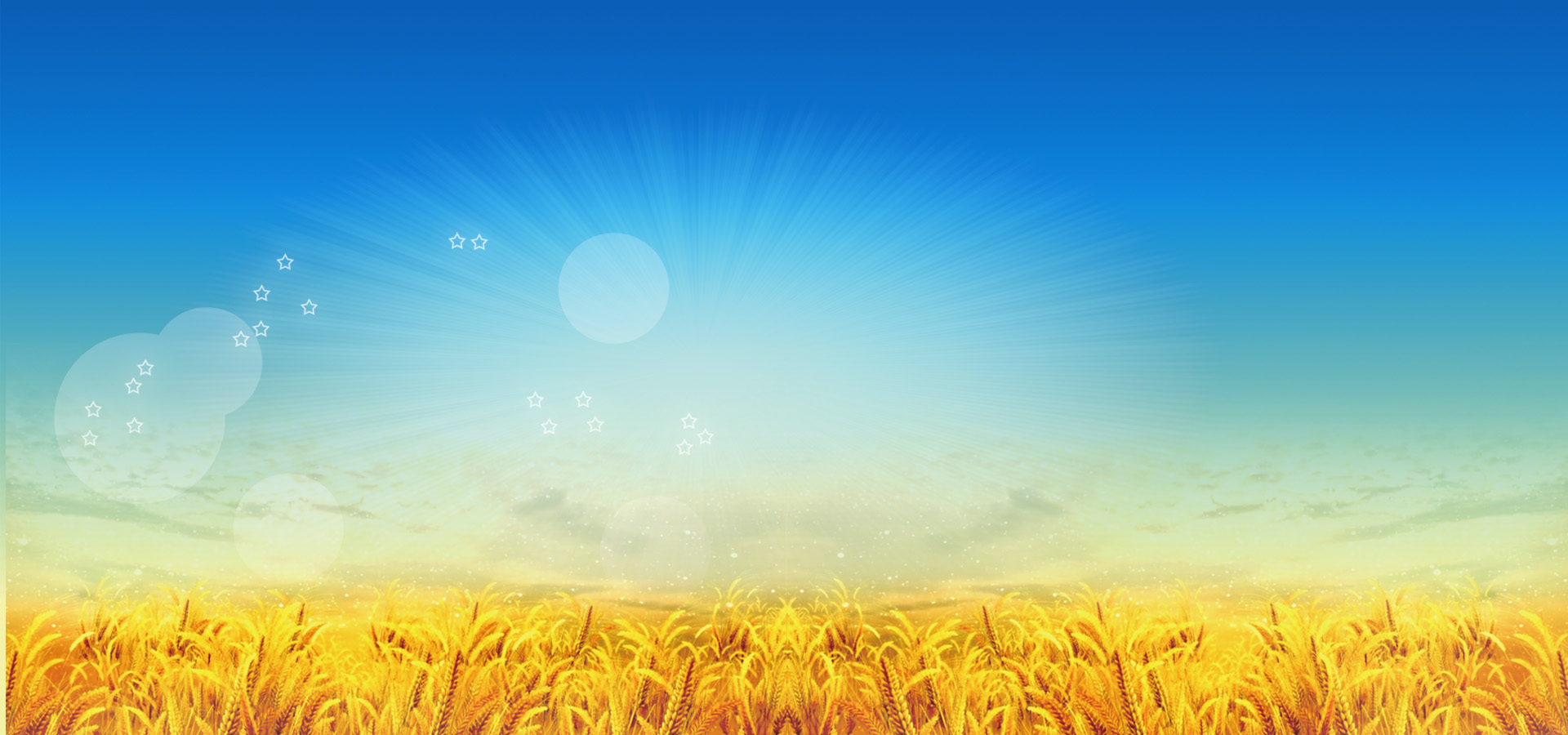 large harvest season background  golden  blue  sky