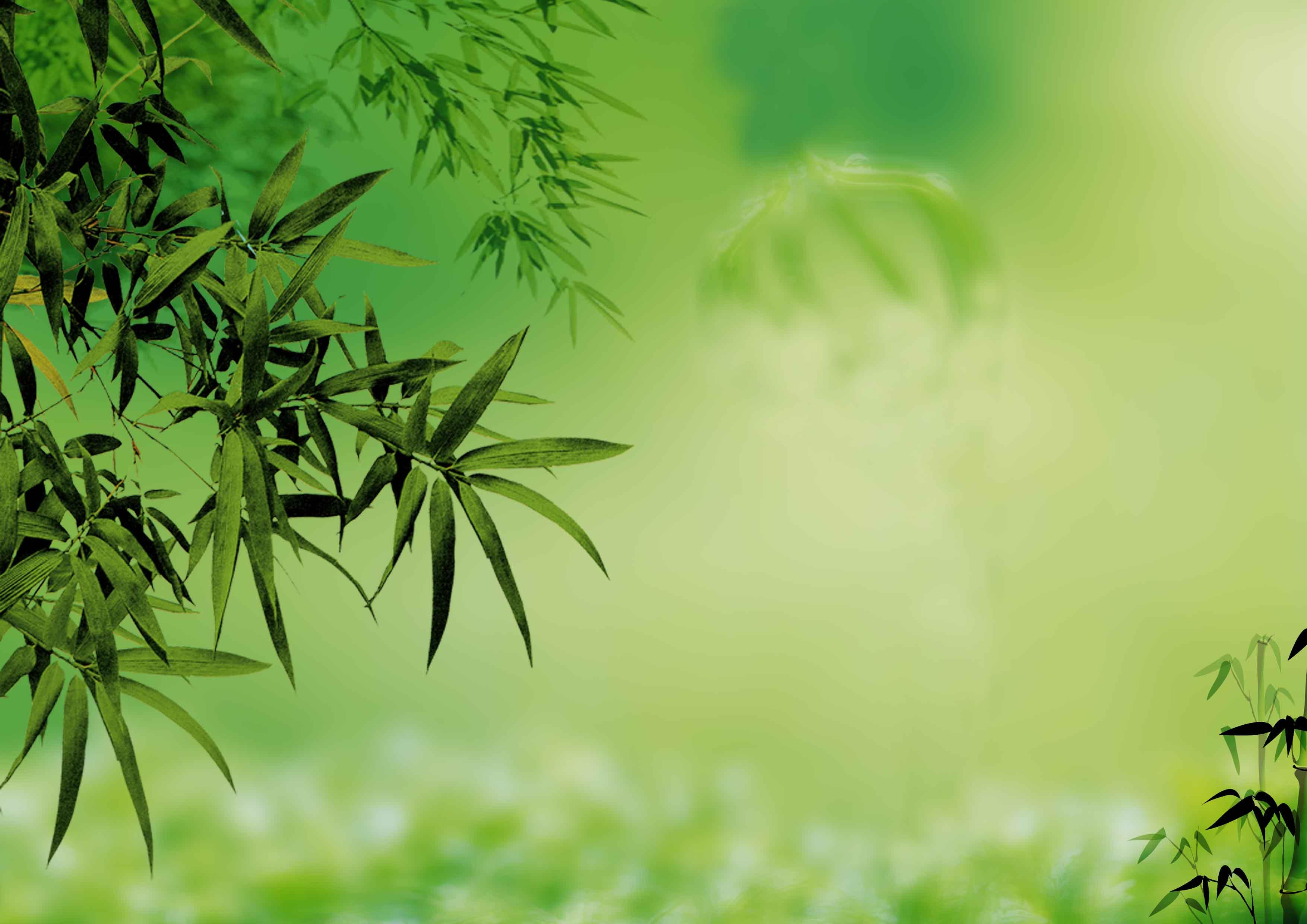 fond vert clair de bambou  fond vert  clair  vert image de