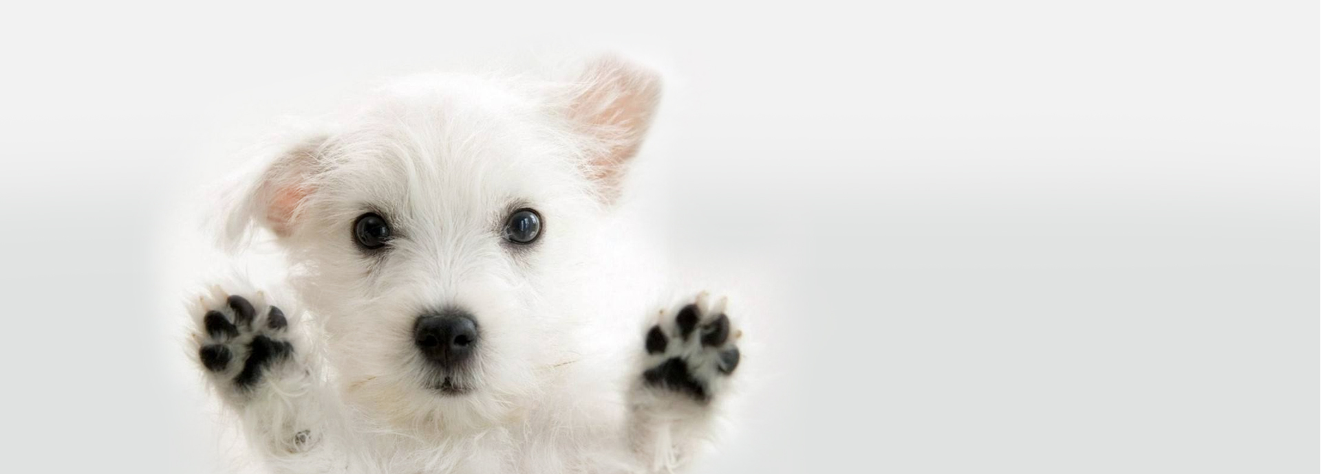 adorable  simple white banner  adorable  pet  dog