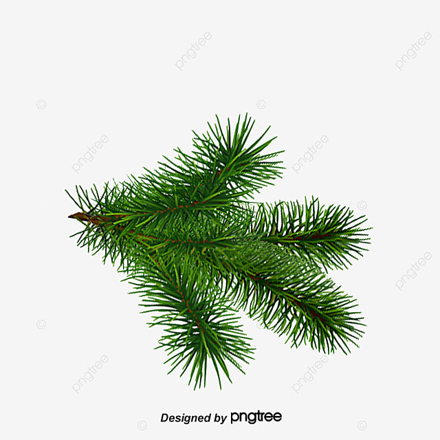 Christmas Tree Branches Pattern Clipart Green Png And Psd