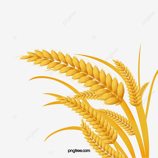 Download PDF A Grain Of Wheat eBook - it-book.org