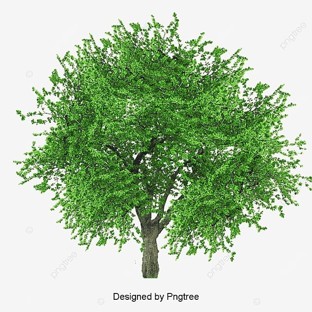 Lush Tree Maunsell Trees Leaves PNG Image And Clipart