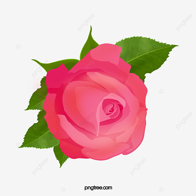 Rose Red Flowers Free PNG Image