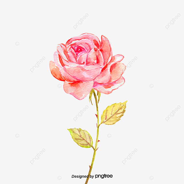 Rose Png Images Vectors And Psd Files Free Download On Pngtree
