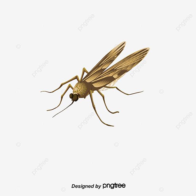 Transparente De Los Mosquitos Mosquito Transparente HD Imagen PNG ...