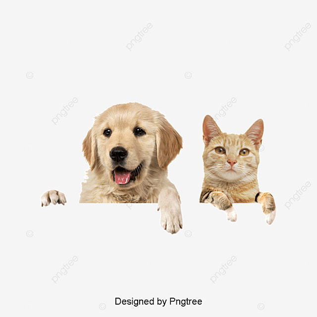 Dogs And Cats Dog Cat Puppy Png Image And Clipart For Free Download