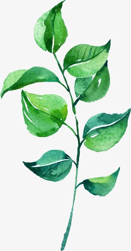 aquarelle de feuilles  peint  u00e0 la main  peinture image png