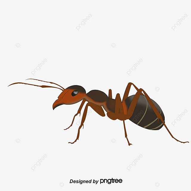 a formiga a formiga insetos fotografia png imagem para ant clip art with ants ant clipart black and white