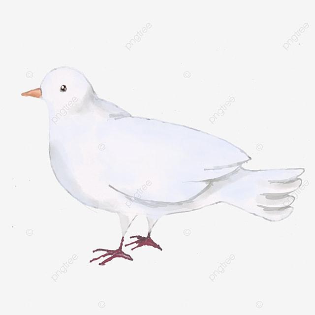 Volando Las Palomas Tipo De Producto Pure White Dove Volando Las