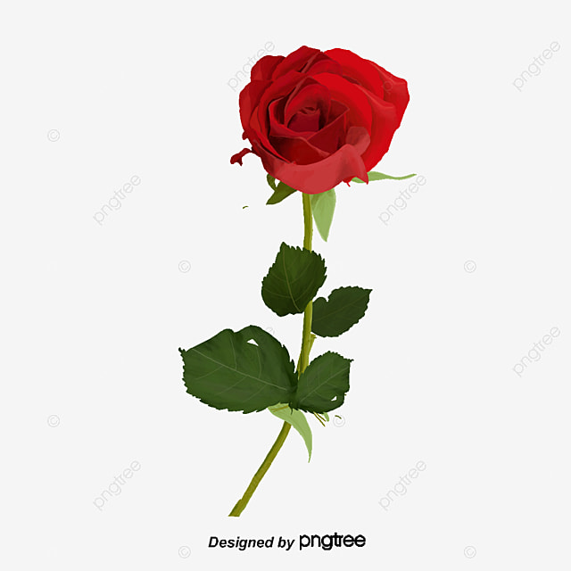 motif de roses roses rose les feuilles fichier png et psd