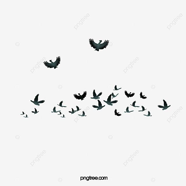 Unduh 63 Foto Gambar Burung Terbang Merpati HD Paling Keren