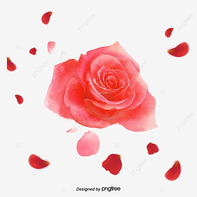 desenhos flores rosa cartoon flores rosa png e vetor para download