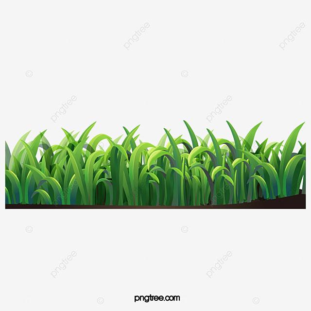 de l herbe de l herbe fichier png et psd pour le
