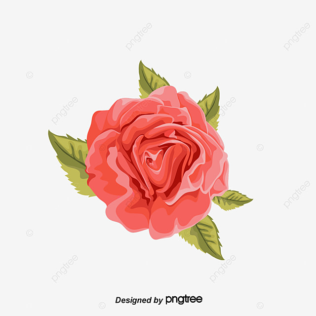 Beautiful Red Roses Fine Rose Free PNG And Vector