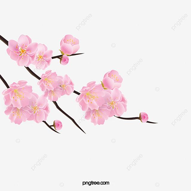 Ramas De Cerezo Flores De Cerezo Ramas Flores Imagen PNG
