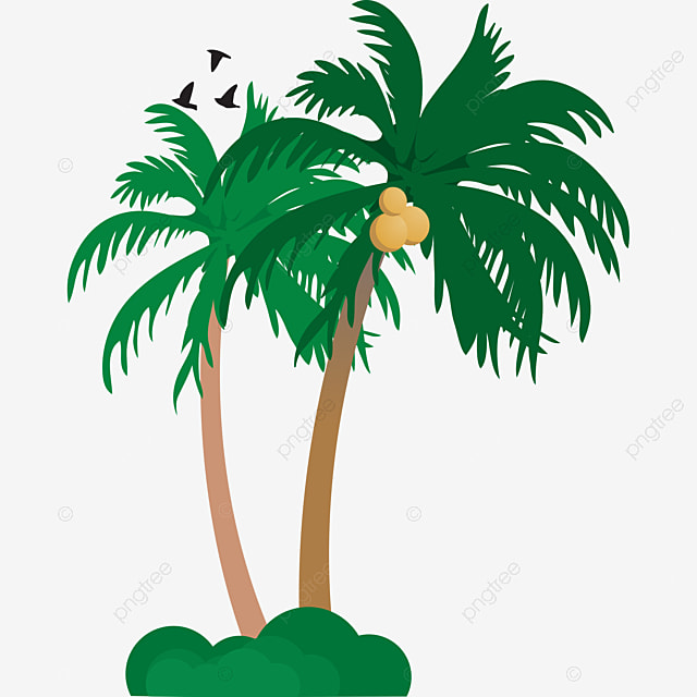 la plage de noix de coco une plante verte noix de coco