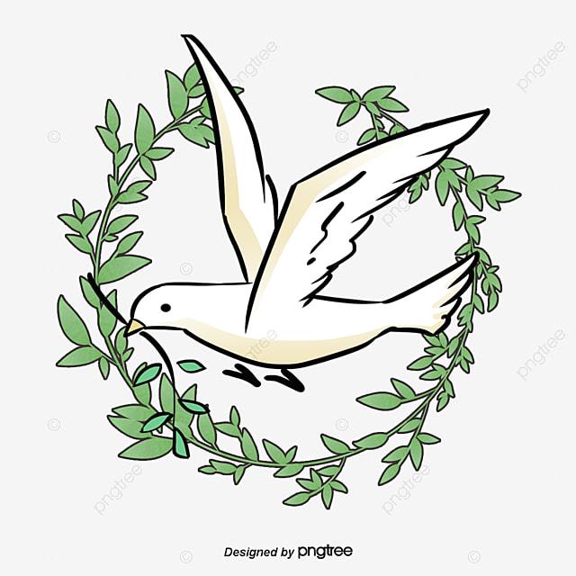 colombe de la paix pigeon olive image png pour le