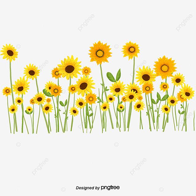 Flores Silvestres Amarillo Flores Silvestres Las Pequenas Flores