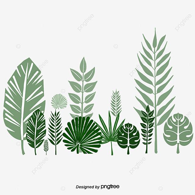Leaves,green,leaf,fresh, Leaves, Green, Leaf PNG Image and