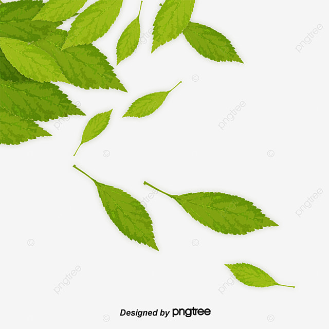 Leaf PNG Images | Vector and PSD Files | Free Download on