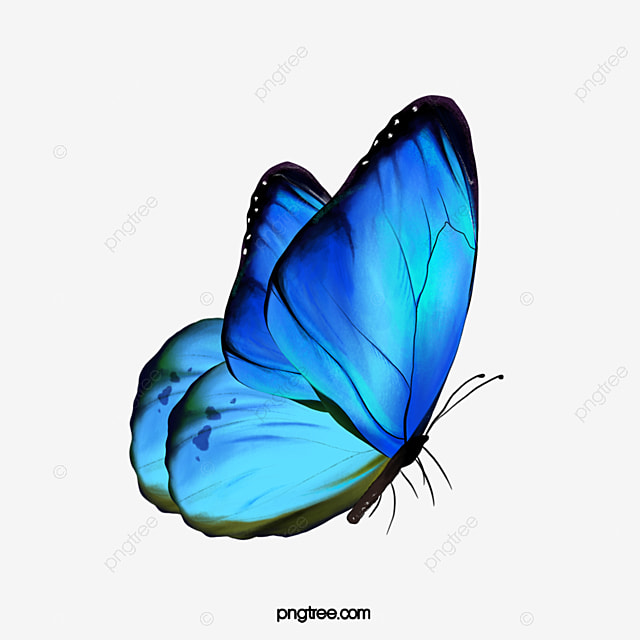 a borboleta  azul  voar  animal png imagem para download butterfly clipart images black and white butterfly clip art images over flowers