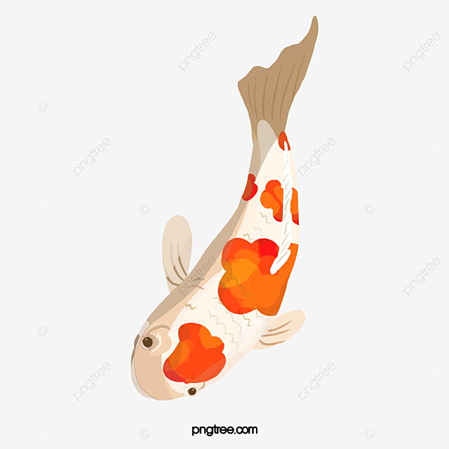 Koi fish koi vector png and psd file for free download for Koi fish retailers