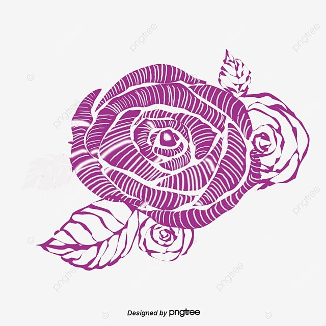 Roseline drawings rose line drawings line png and psd