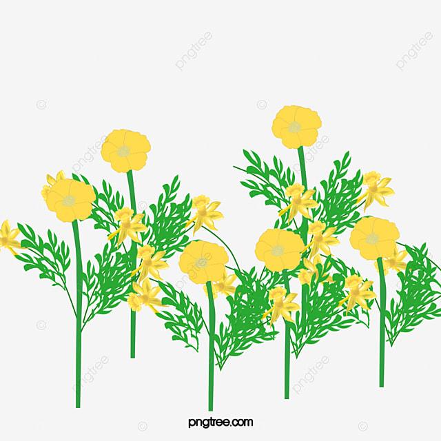Canola Flower Spring Yellow Canola Flower Spring Yellow