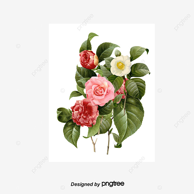 hd flowers png images vectors and psd files free download on pngtree