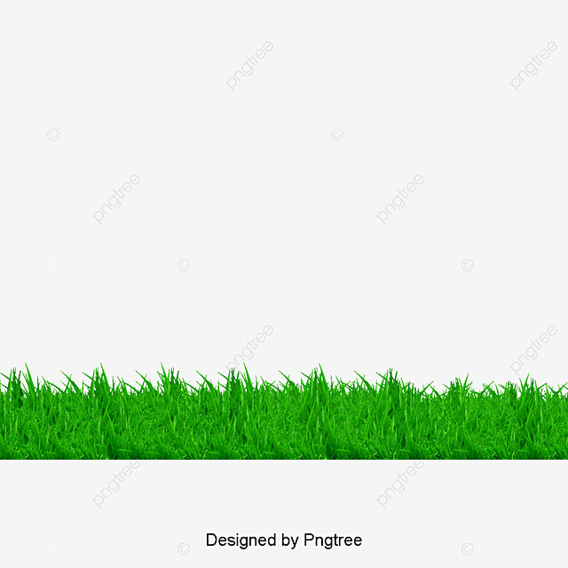 Grass, Green Grass, Green PNG and PSD