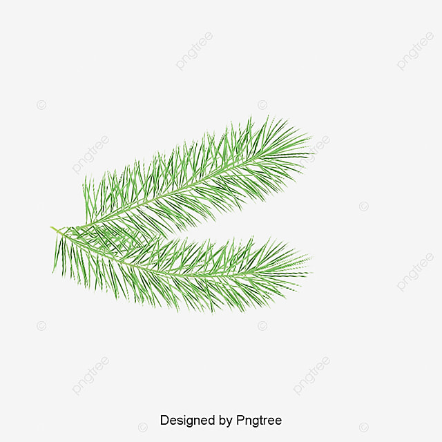 Palm Leaf Leaves PNG Image And Clipart