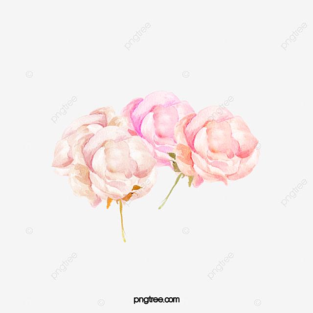 Drawing decorative pink flowers flower flowers watercolor petals drawing decorative pink flowers flower flowers watercolor petals png image and clipart mightylinksfo