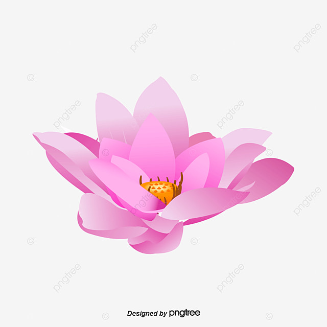 Lotus Flower Png Images Vectors And Psd Files Free Download On