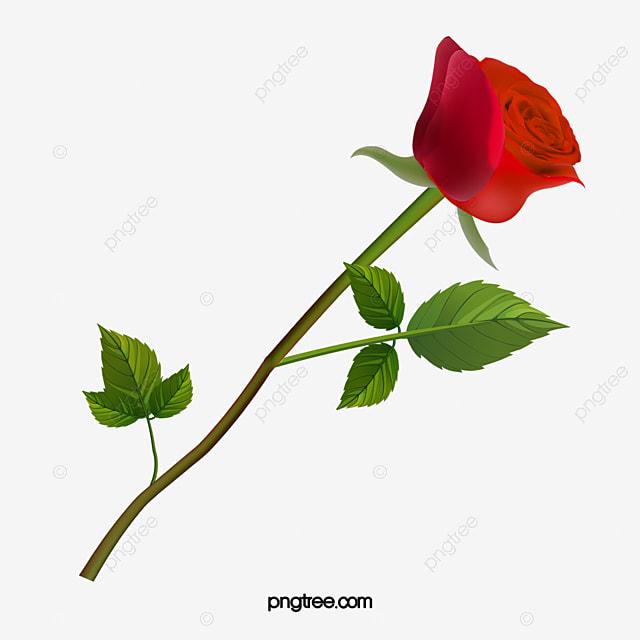 valentine element red rose valentines day png image
