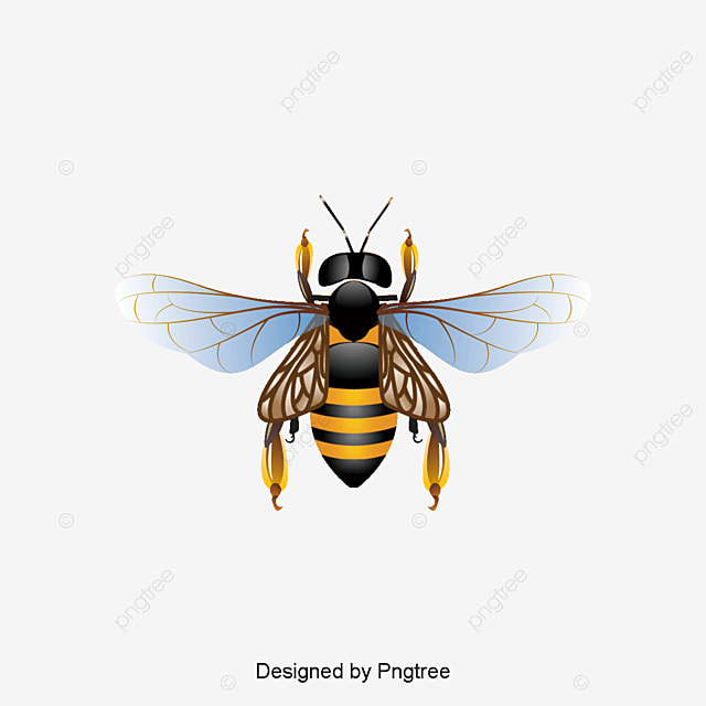 Bee, Bee Clipart, Vector Bee PNG Transparent Clipart Image