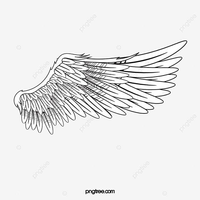 des ailes des ailes ange blanc image png pour le