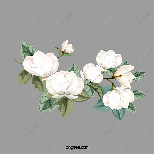 Flowers white flowers clipart png image and clipart for free download flowers white flowers clipart png image and clipart mightylinksfo