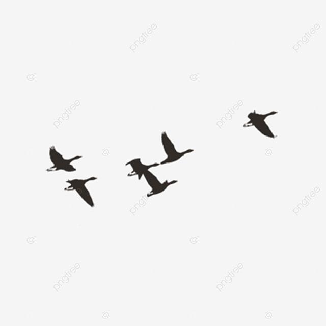 Le vol d oiseau le vol d oiseau oiseau image png pour le t l chargement libre - Jeux d oiseau qui vole ...