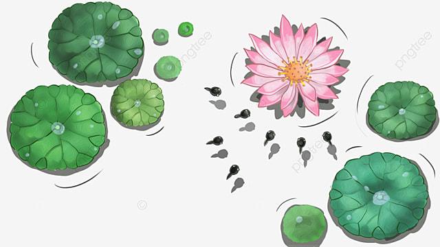 cartoon tadpole  tadpole  animal  green png image and Hopping Frog Clip Art cartoon frog clipart