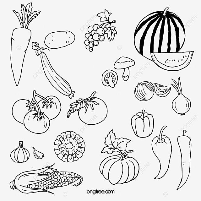 картинки черно белые фруктов