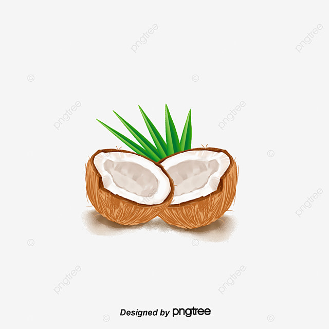 Coconut Fruit Coconut Vector Png And Vector For Free
