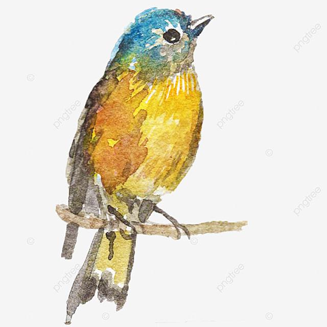 Aves Tropicales, Aves Tropicales, Tropical, Aves Imagen PNG para ...