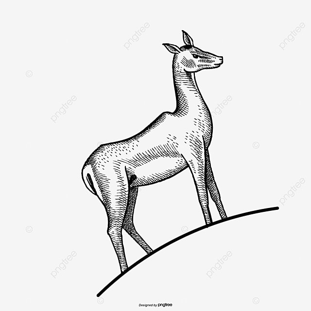 Elk black and white line drawing png and psd