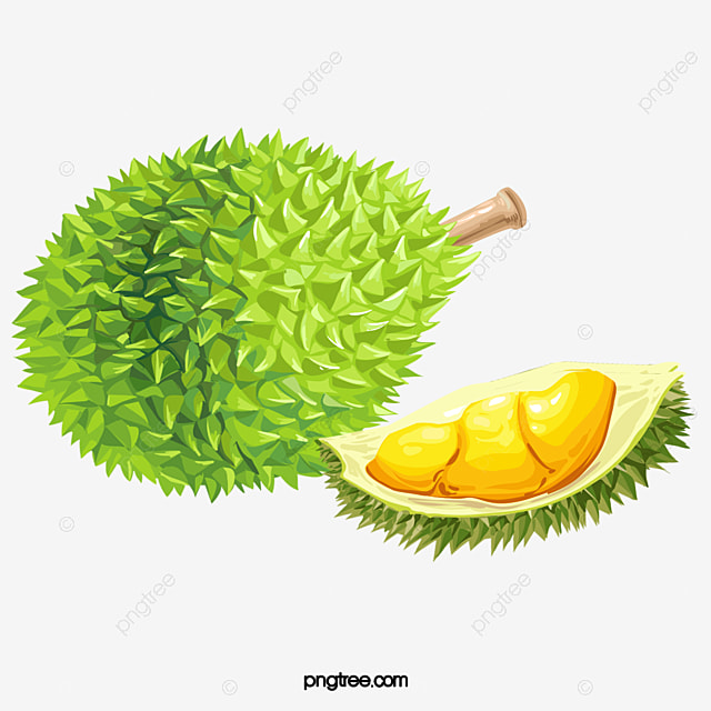 durian fruit green png transparent clipart image and psd file for free download durian fruit green png transparent