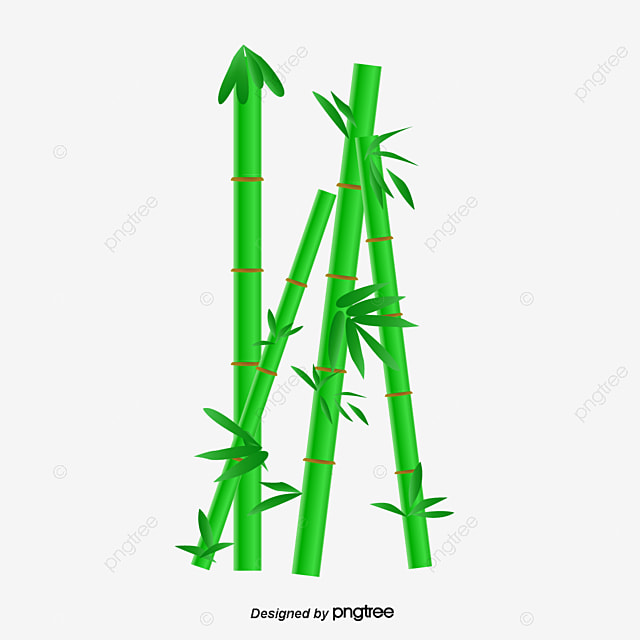 dessin de vecteur de bambou bambou les feuilles de bambou