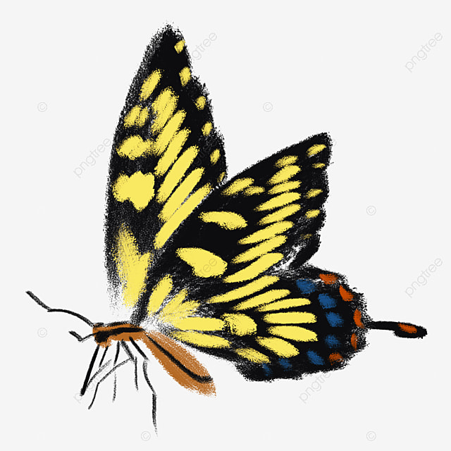 Бабочка на член